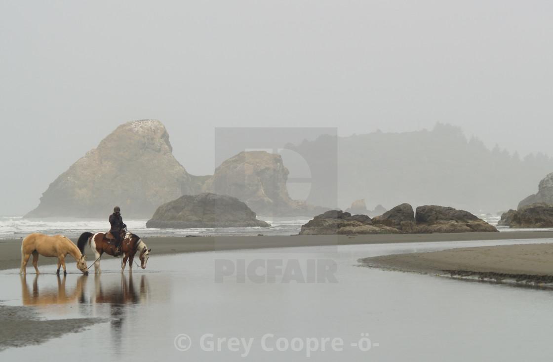 """Horses on Moonstone Beach"" stock image"