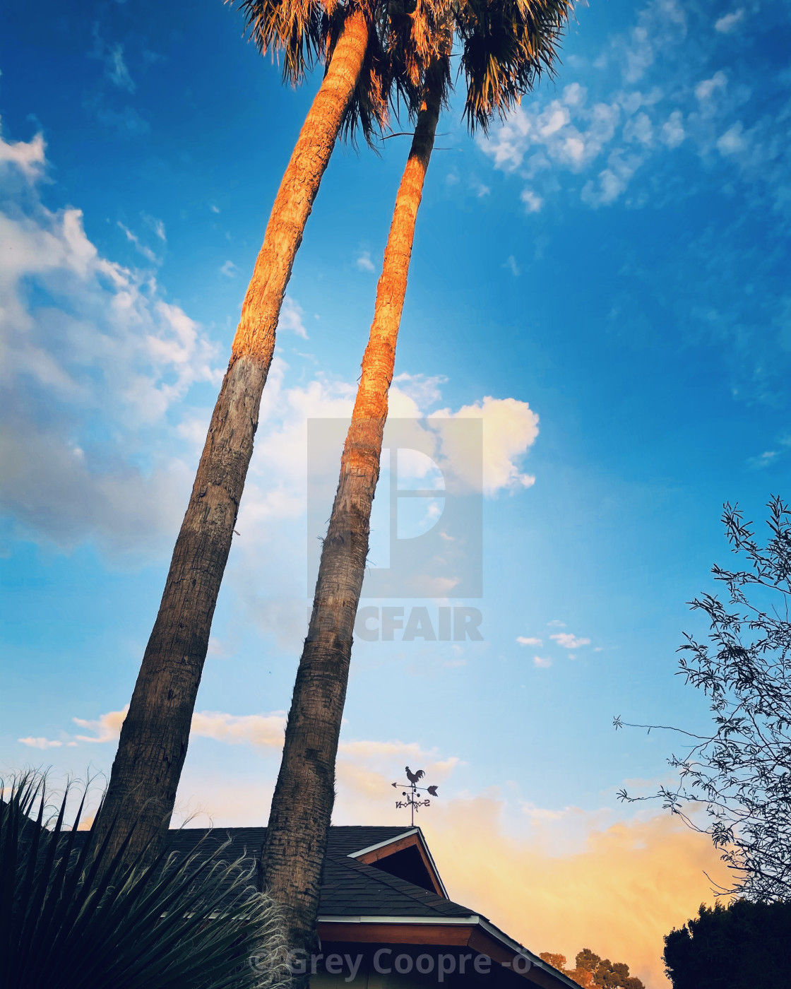 """""""Palm trees at sunset"""" stock image"""