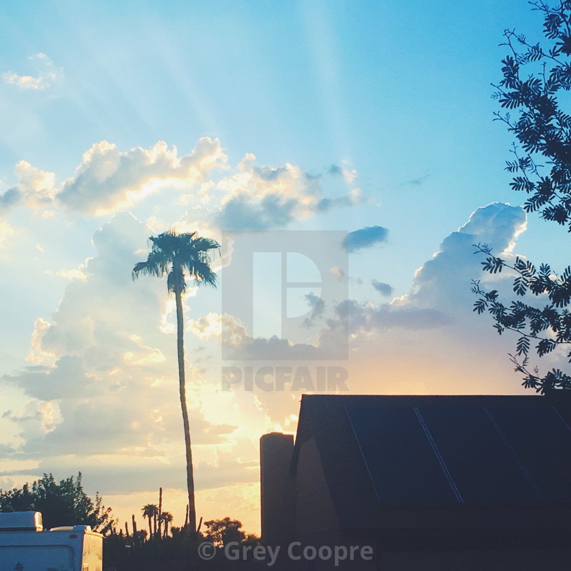 """""""Sunset with Palm tree"""" stock image"""