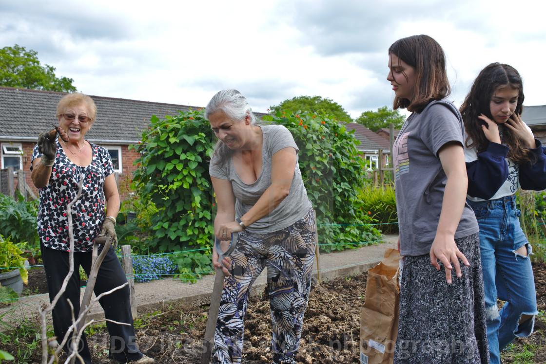 Three generations of women harvesting allotment produce