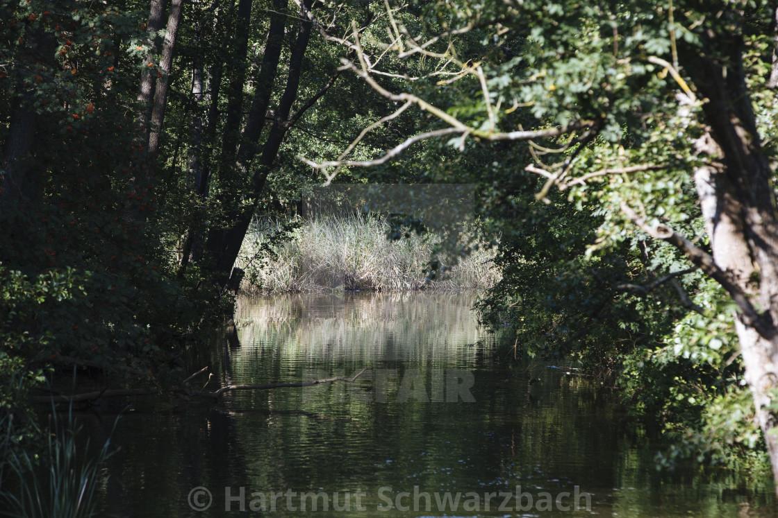"""Hartmut Schwarzbach_argus"" stock image"