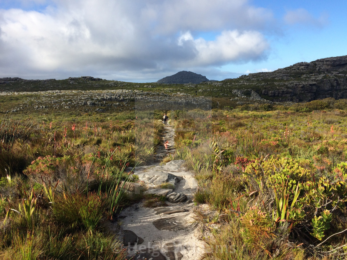 """""""Table Mountain paths"""" stock image"""