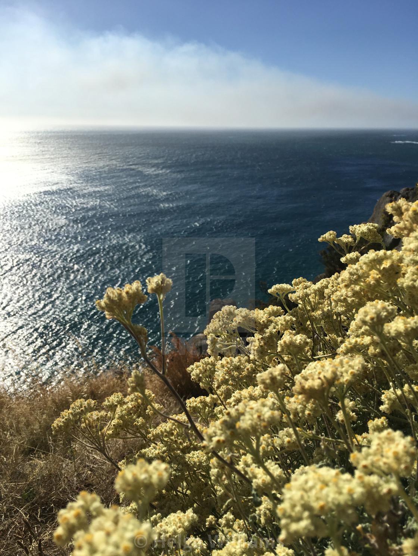 """""""Wild Flowers & Ocean Views"""" stock image"""