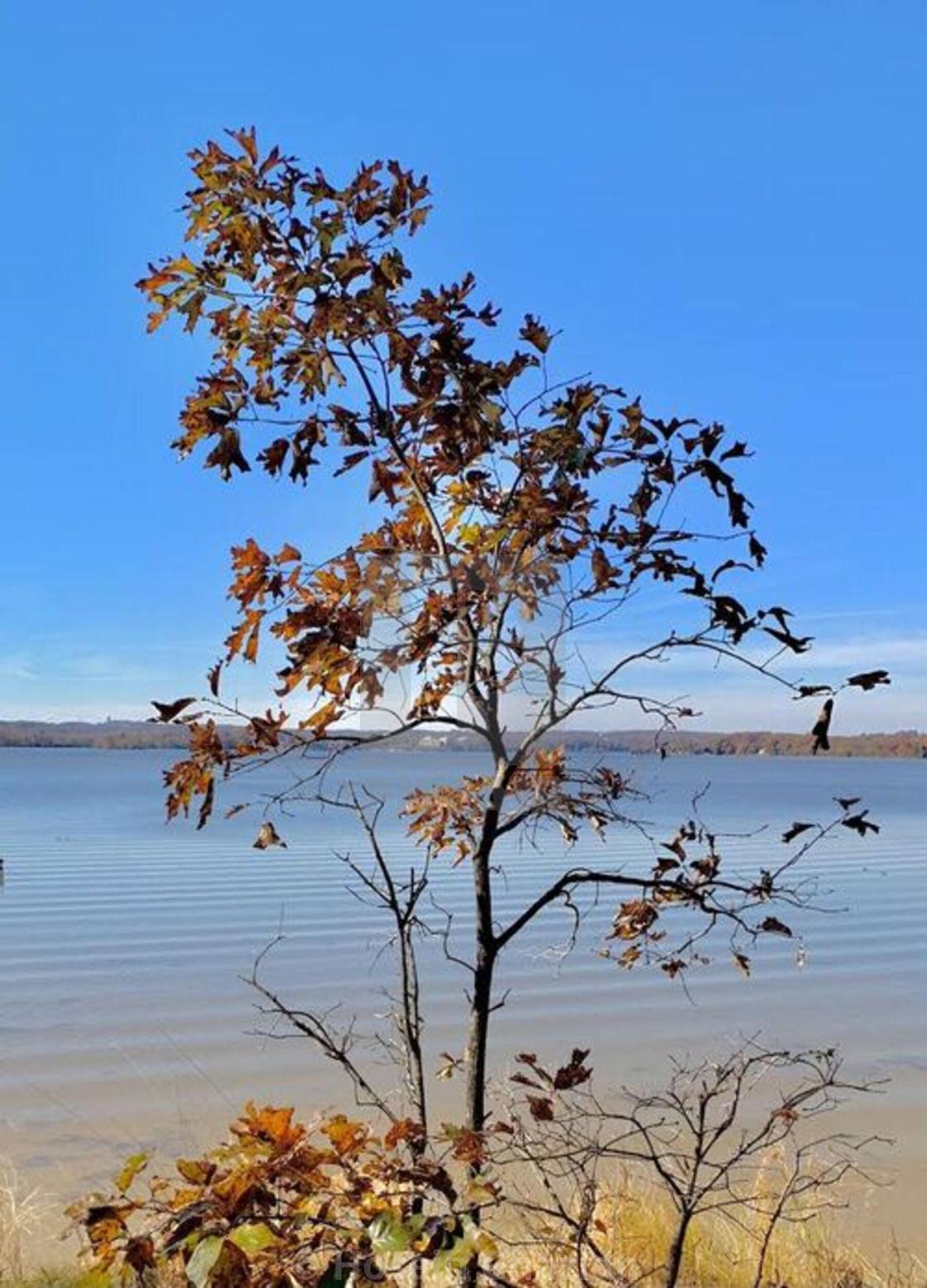 """""""Tree & lake"""" stock image"""