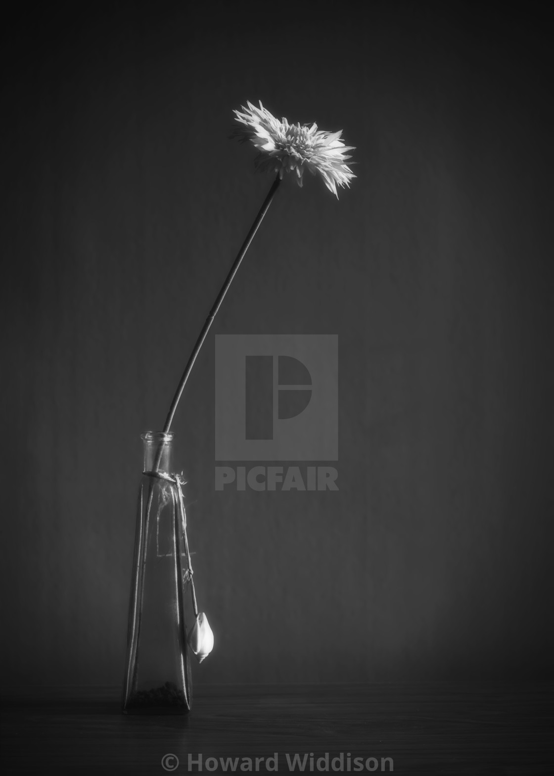 """""""Flower in a vase"""" stock image"""