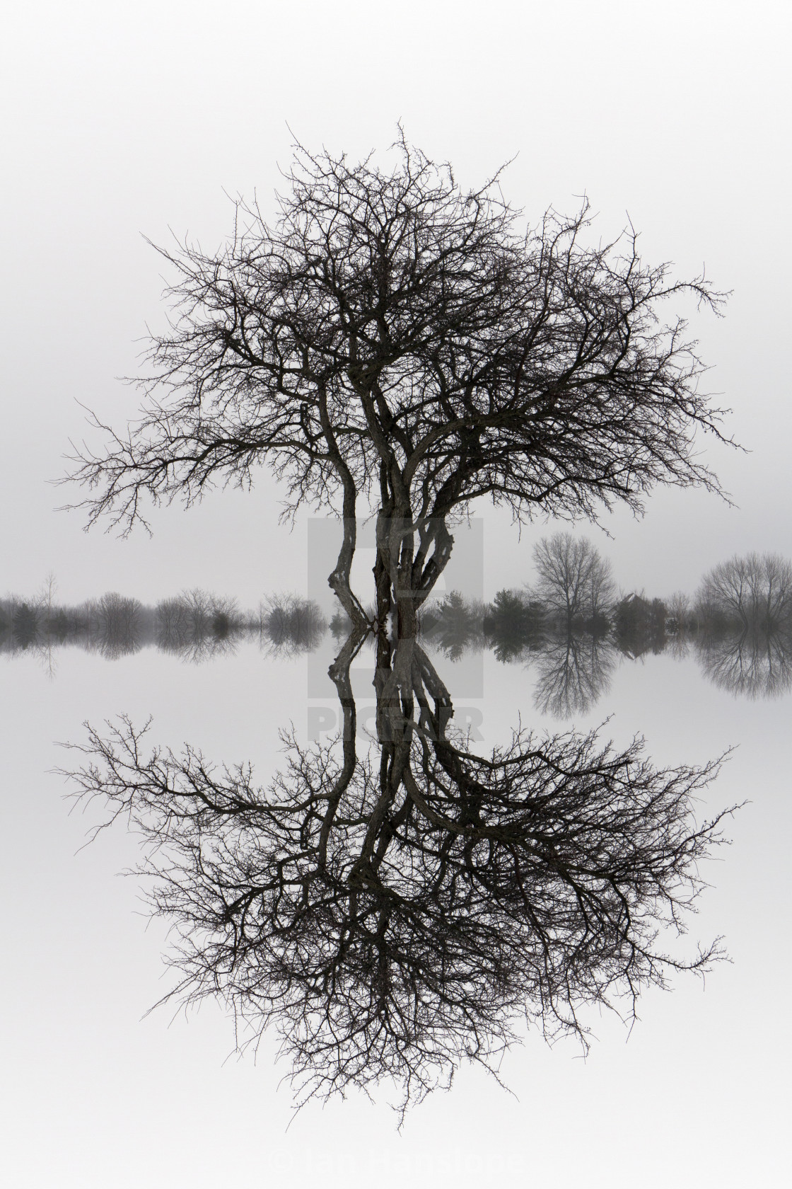 """""""Tree with Reflection"""" stock image"""