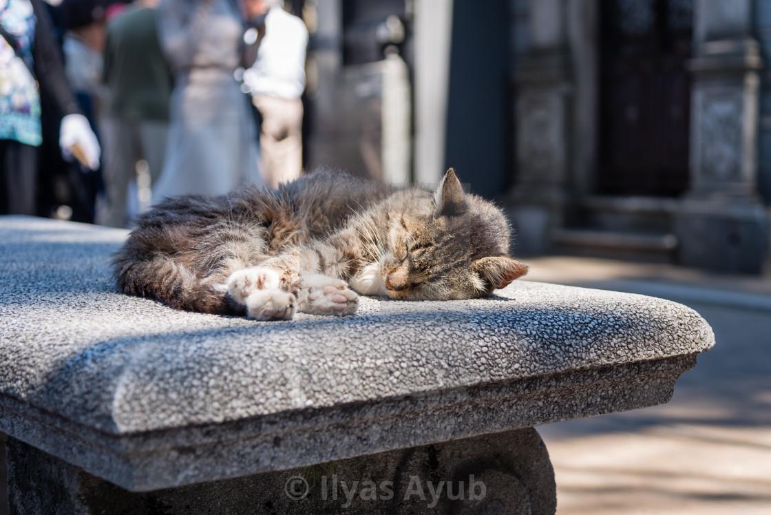 """A cat relaxing in La Recoleta Cemetery"" stock image"