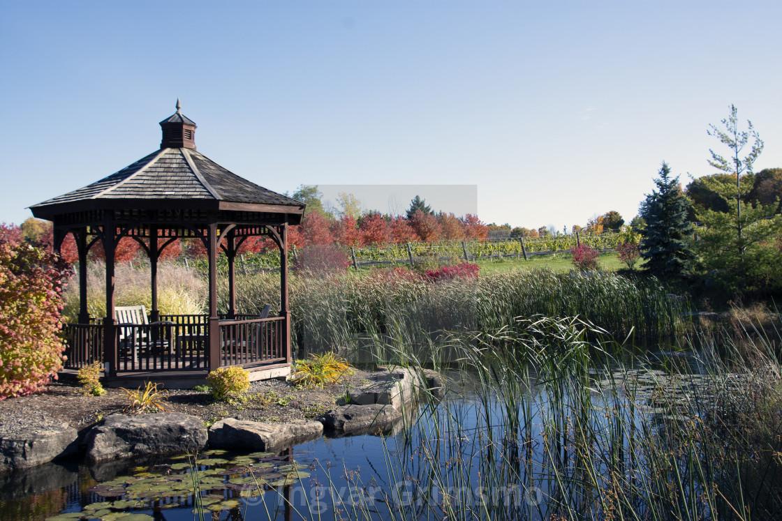 """""""Fall in the Niagara Wine Region"""" stock image"""