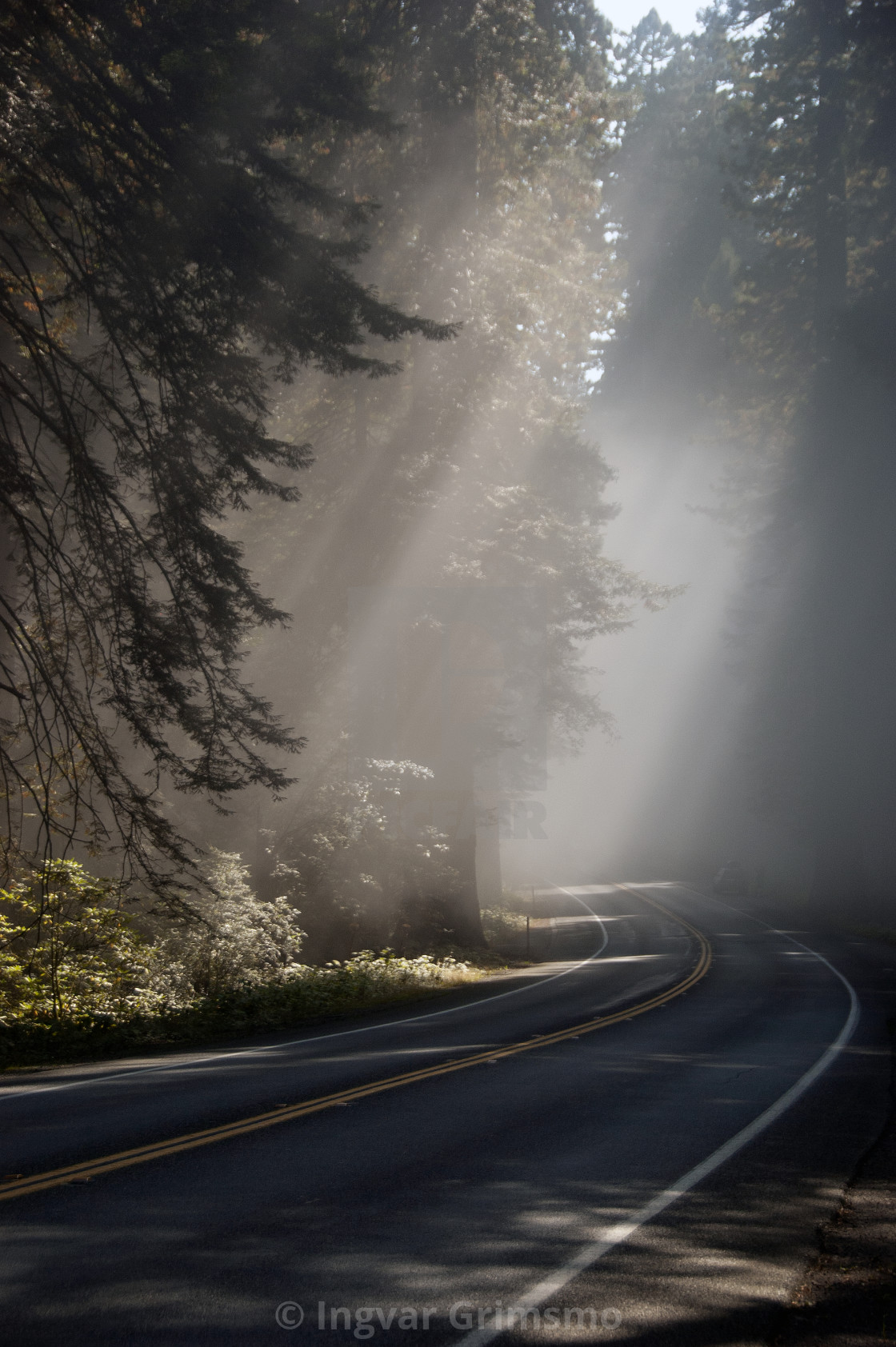 """""""Foggy Road in the Forest"""" stock image"""