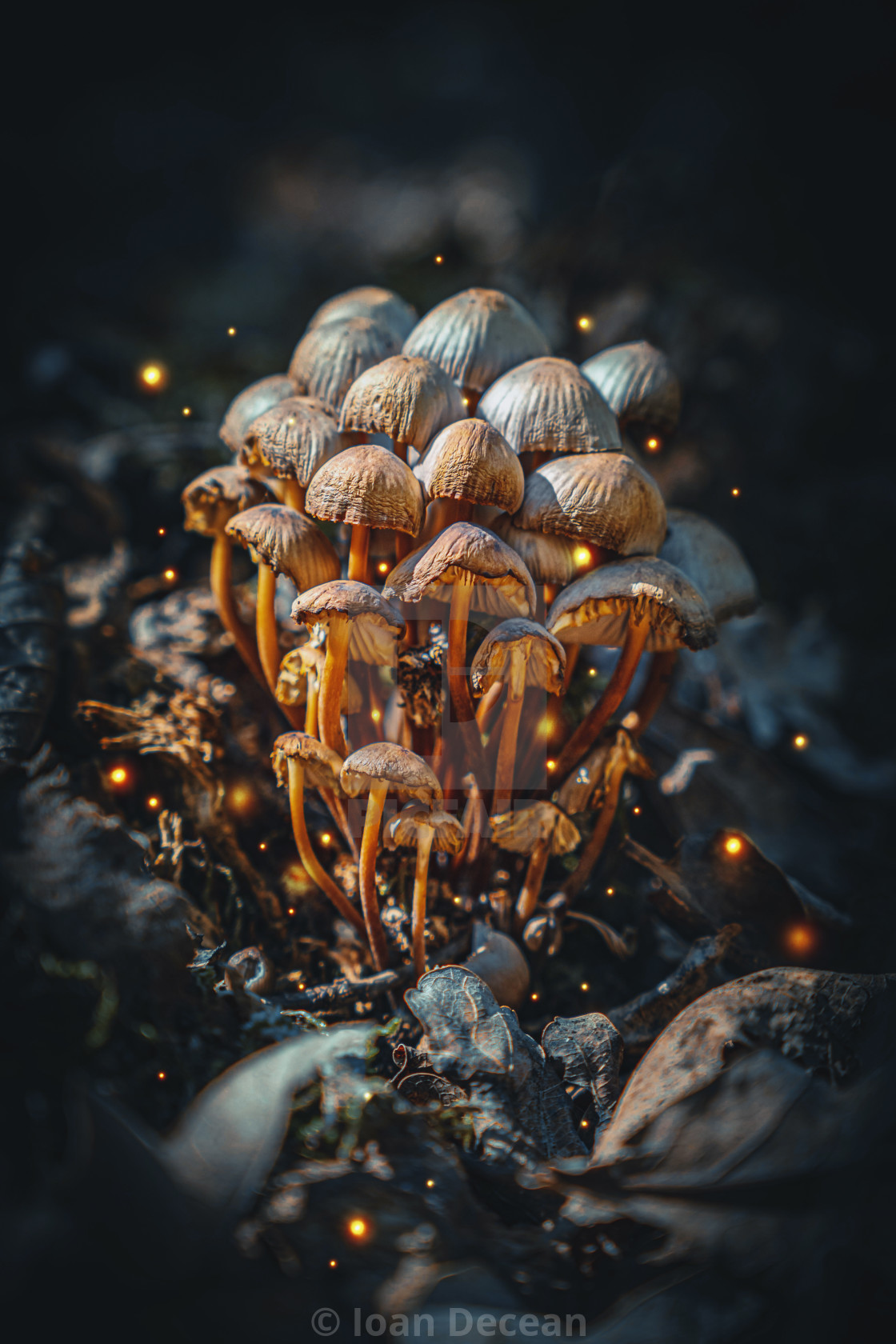 """""""Wild Magic Mushrooms in the Fantasy Forest"""" stock image"""
