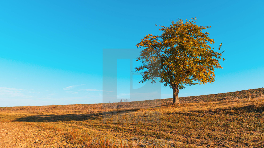 """""""Lonely Tree on the Hill"""" stock image"""