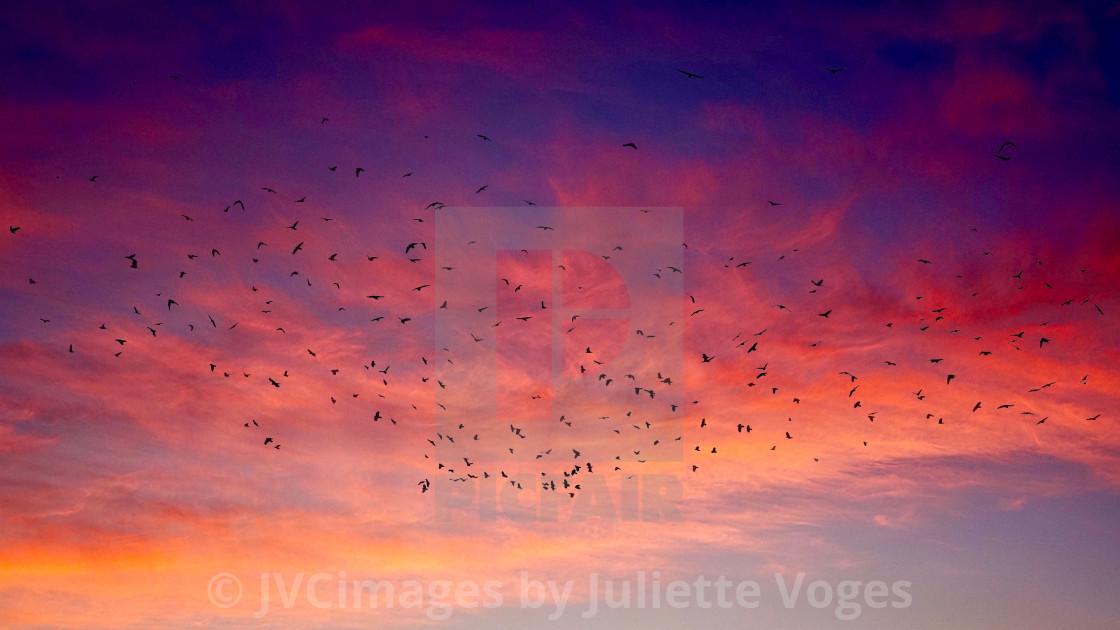 """Sunset Flight"" stock image"