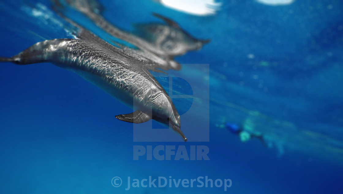 """""""Dolphins 04"""" stock image"""