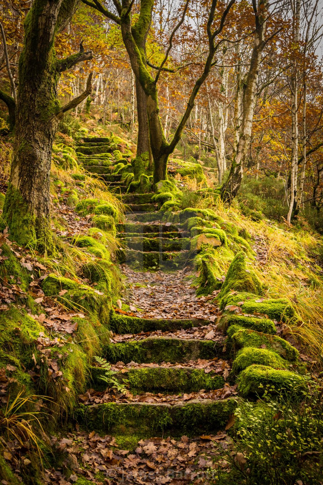 """Autumn Steps"" stock image"