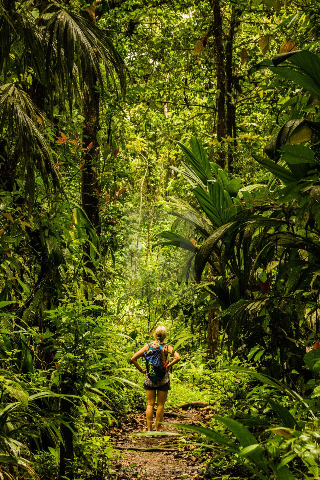 """Deep in the Rainforest."" stock image"