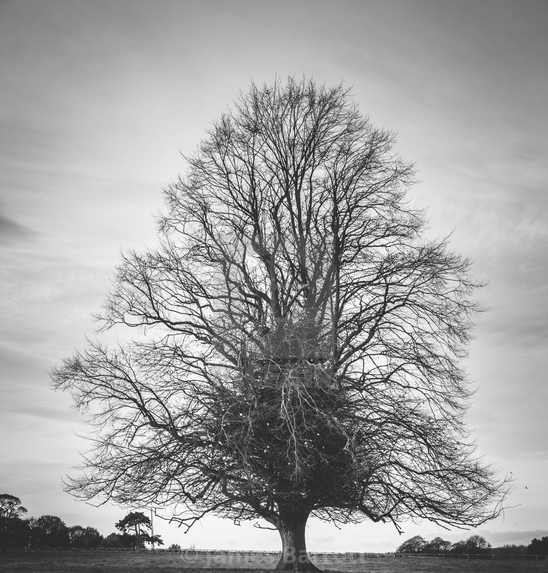 """A lone tree."" stock image"