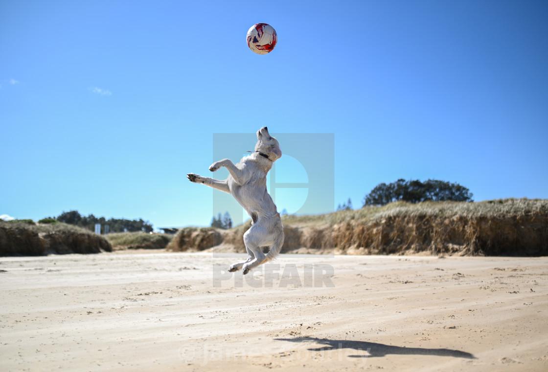"""Jump dog"" stock image"