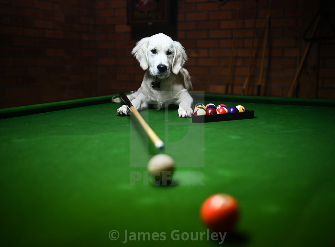 """Doggie O'Sullivan"" stock image"