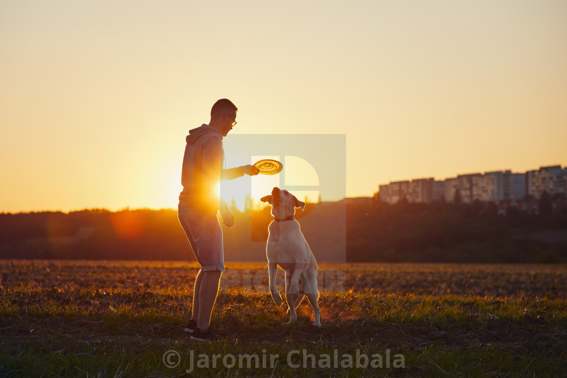 """""""Man throwing flying disc for his dog"""" stock image"""