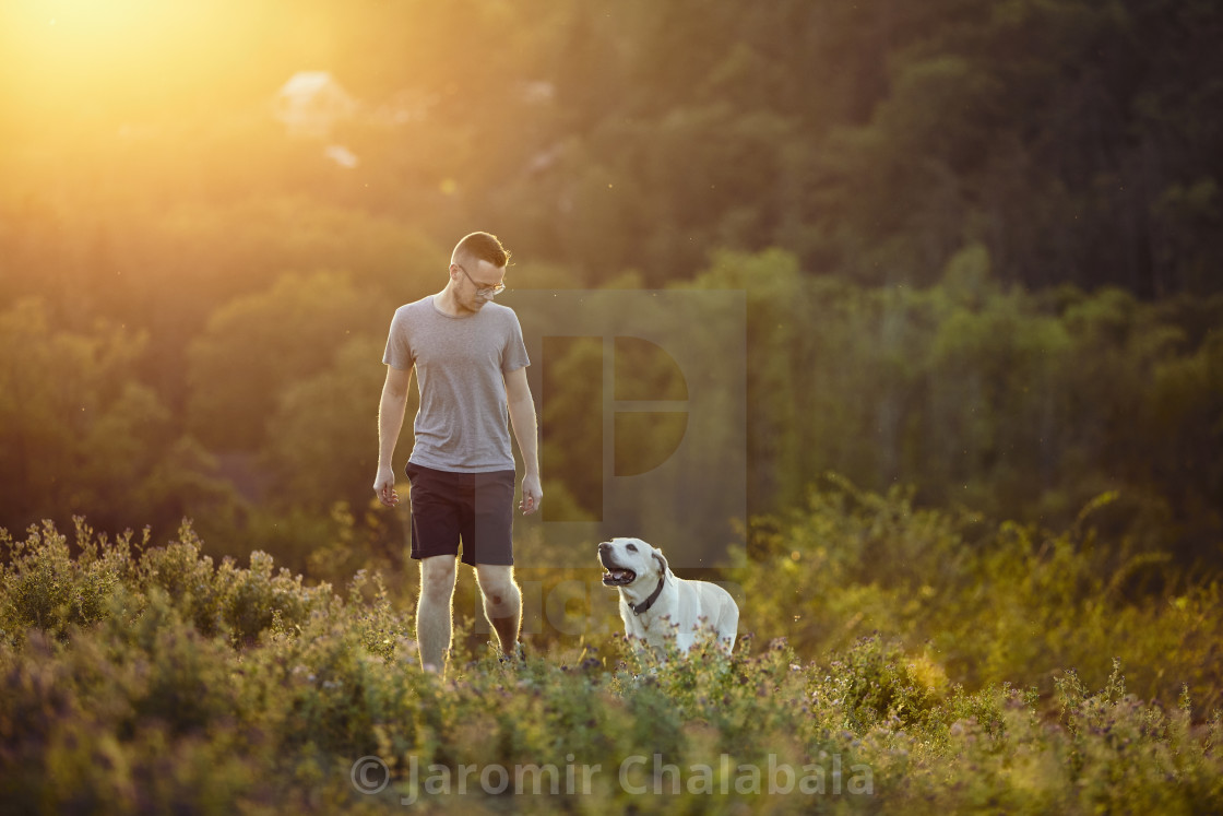 """Man with dog walking on meadow at sunset"" stock image"