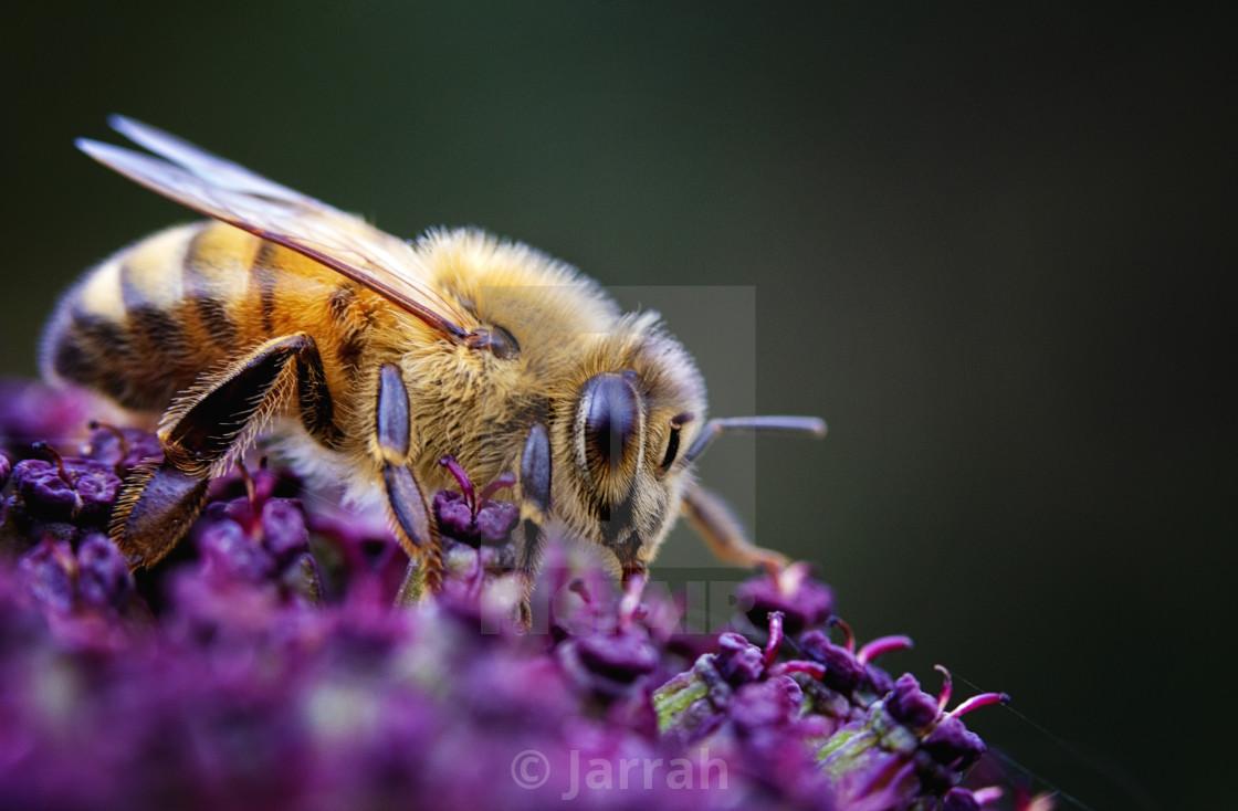 """Little Pollinator"" stock image"
