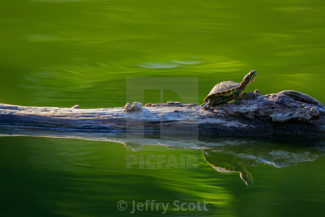 """""""Turtle in green"""" stock image"""