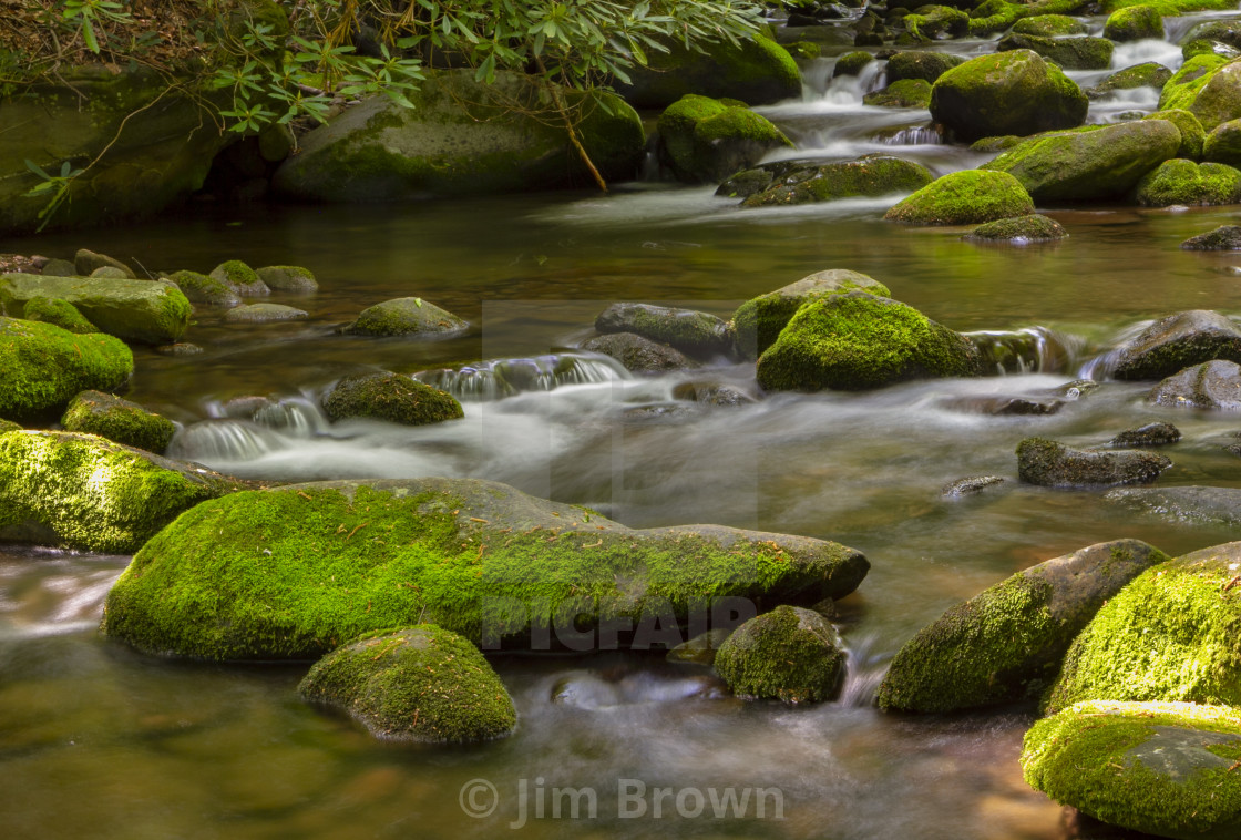 """Cascading river in the woods"" stock image"