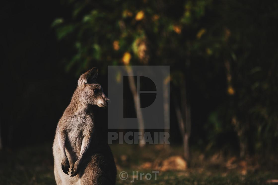 """Kangaroo Way 0218"" stock image"