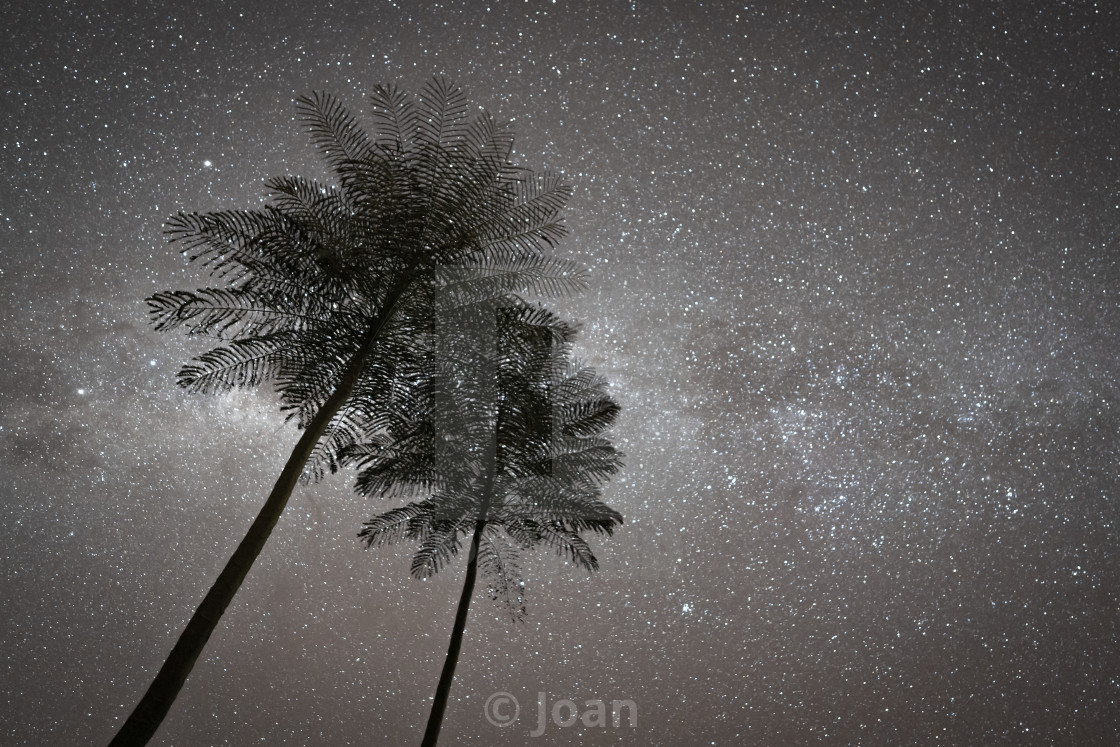 """""""STARS WITH PALM"""" stock image"""