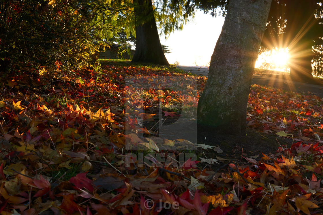 """""""Autumn Leaves with Sun Star"""" stock image"""