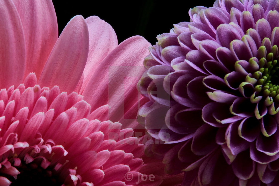"""""""Pink and Purple Flowers"""" stock image"""