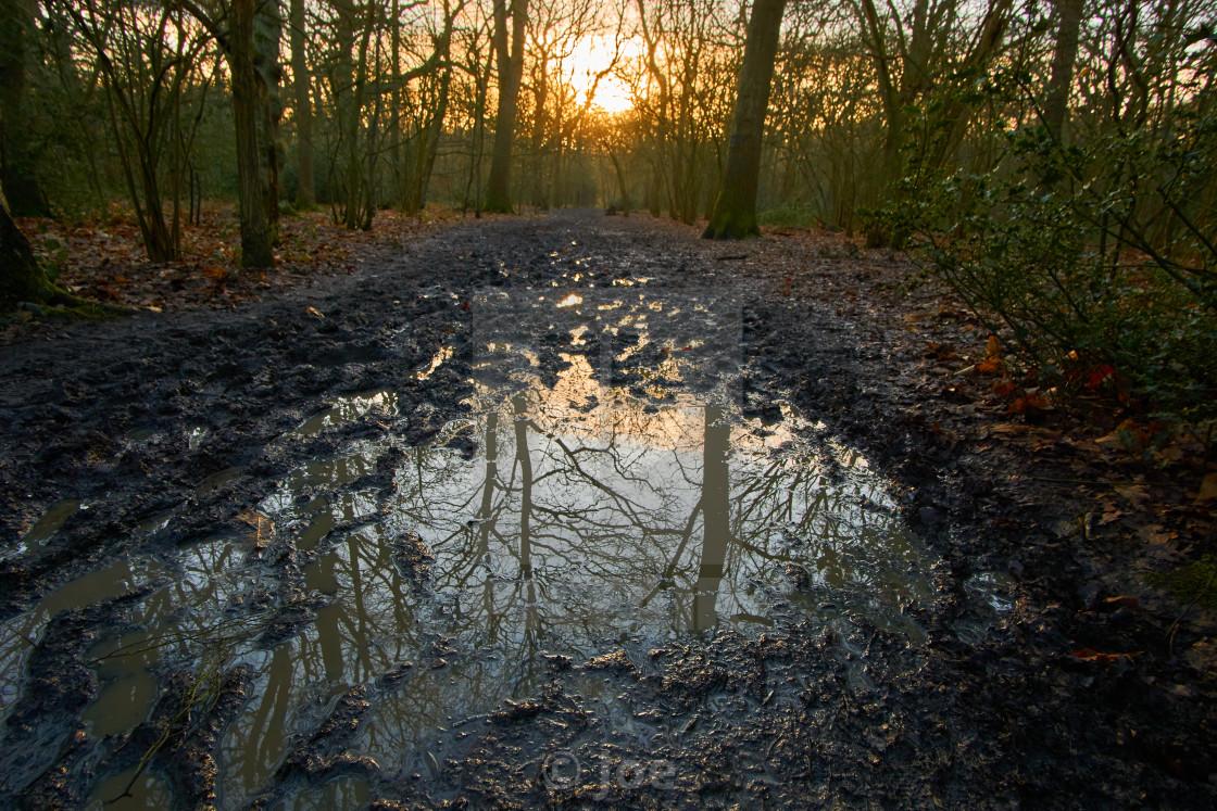 """""""Woodland Sunrise"""" stock image"""