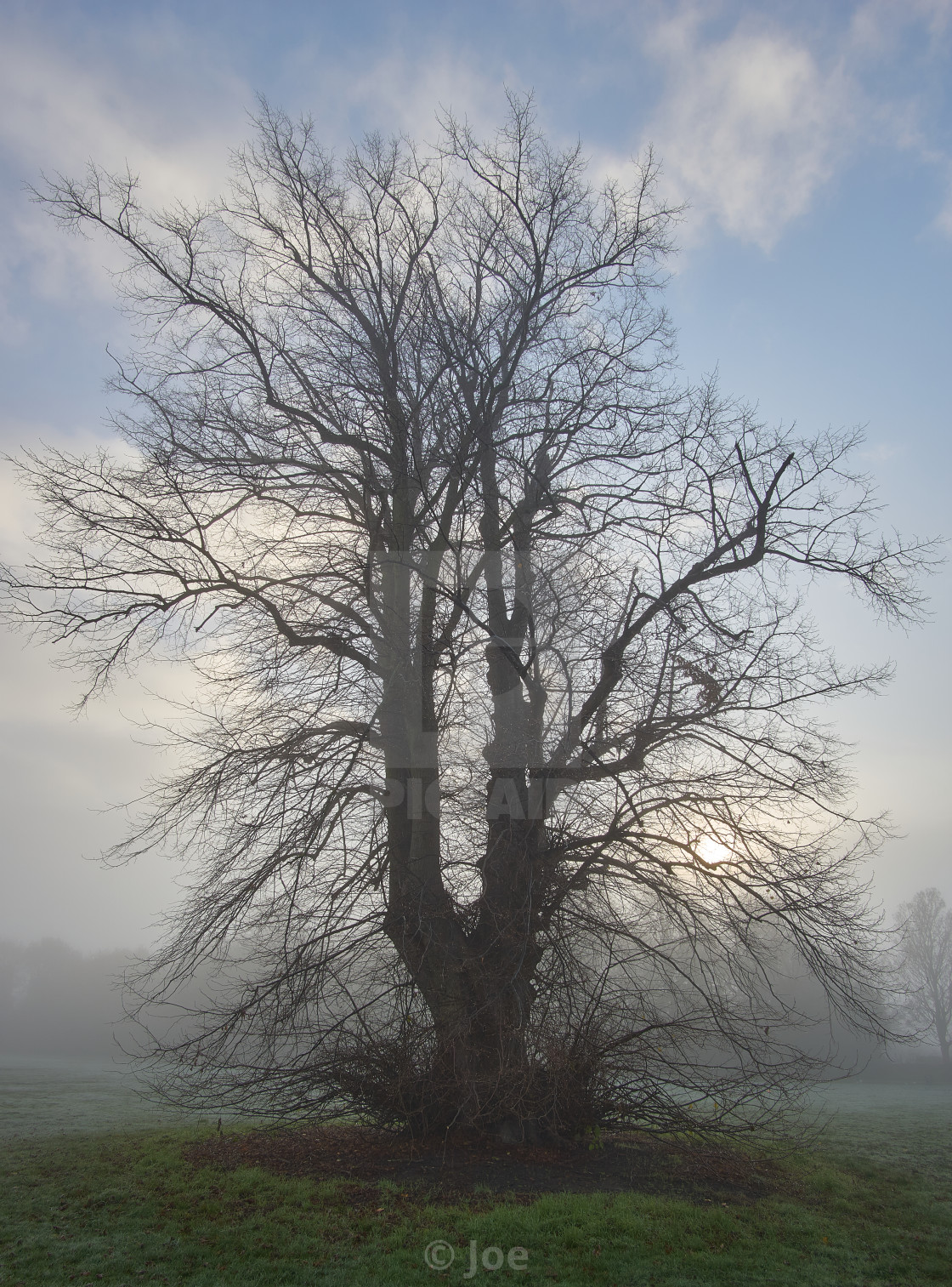 """""""Tree Shrouded in Fog"""" stock image"""