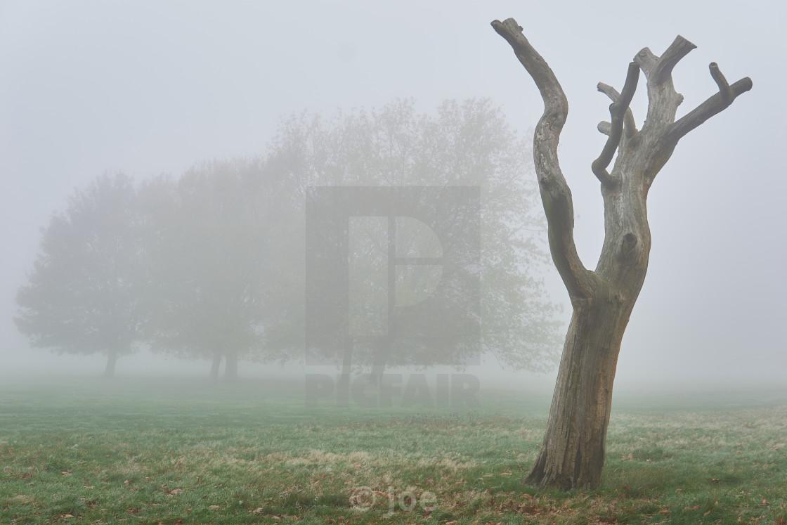 """Dead Tree in the Mist"" stock image"