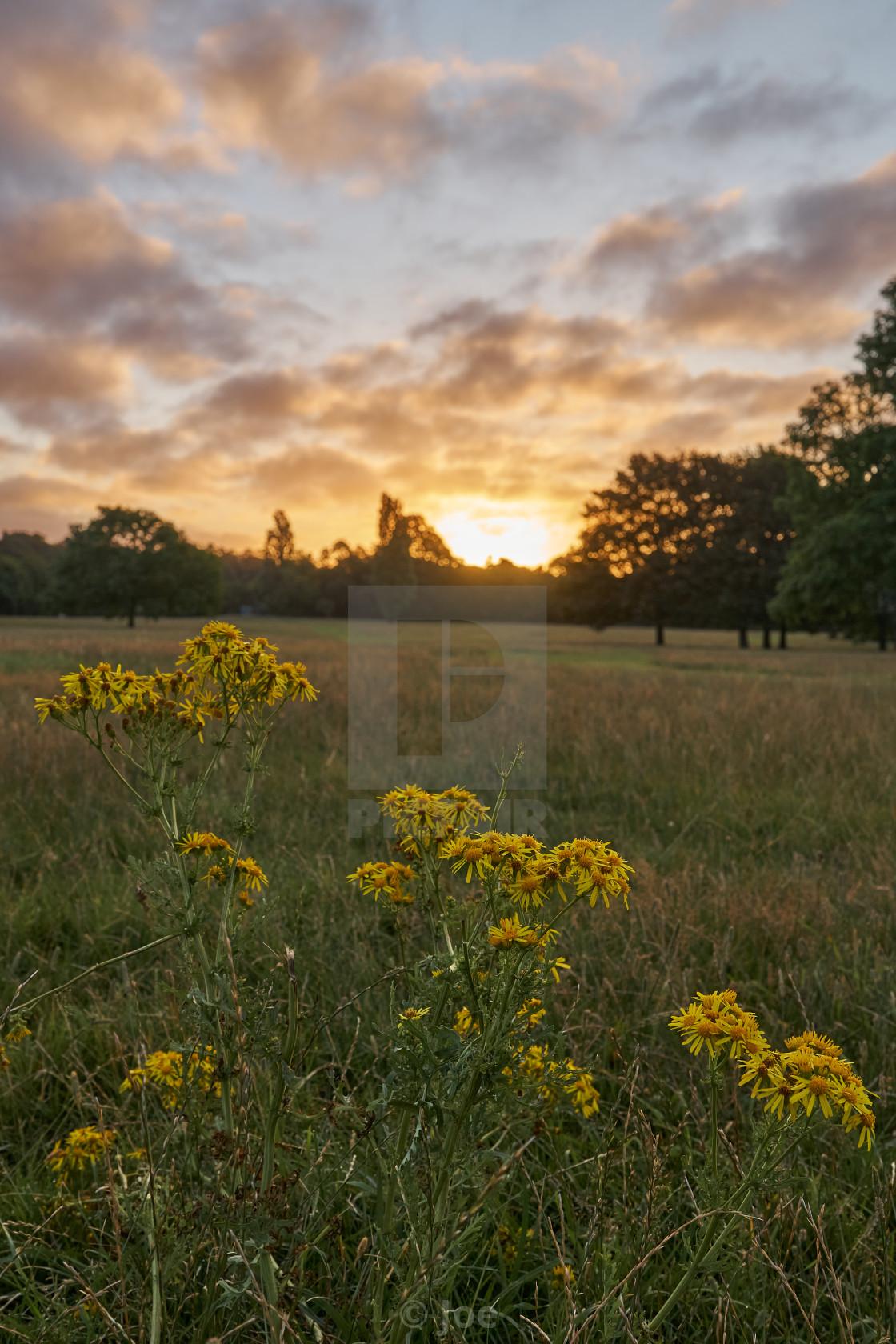 """Wildflower Sunrise"" stock image"