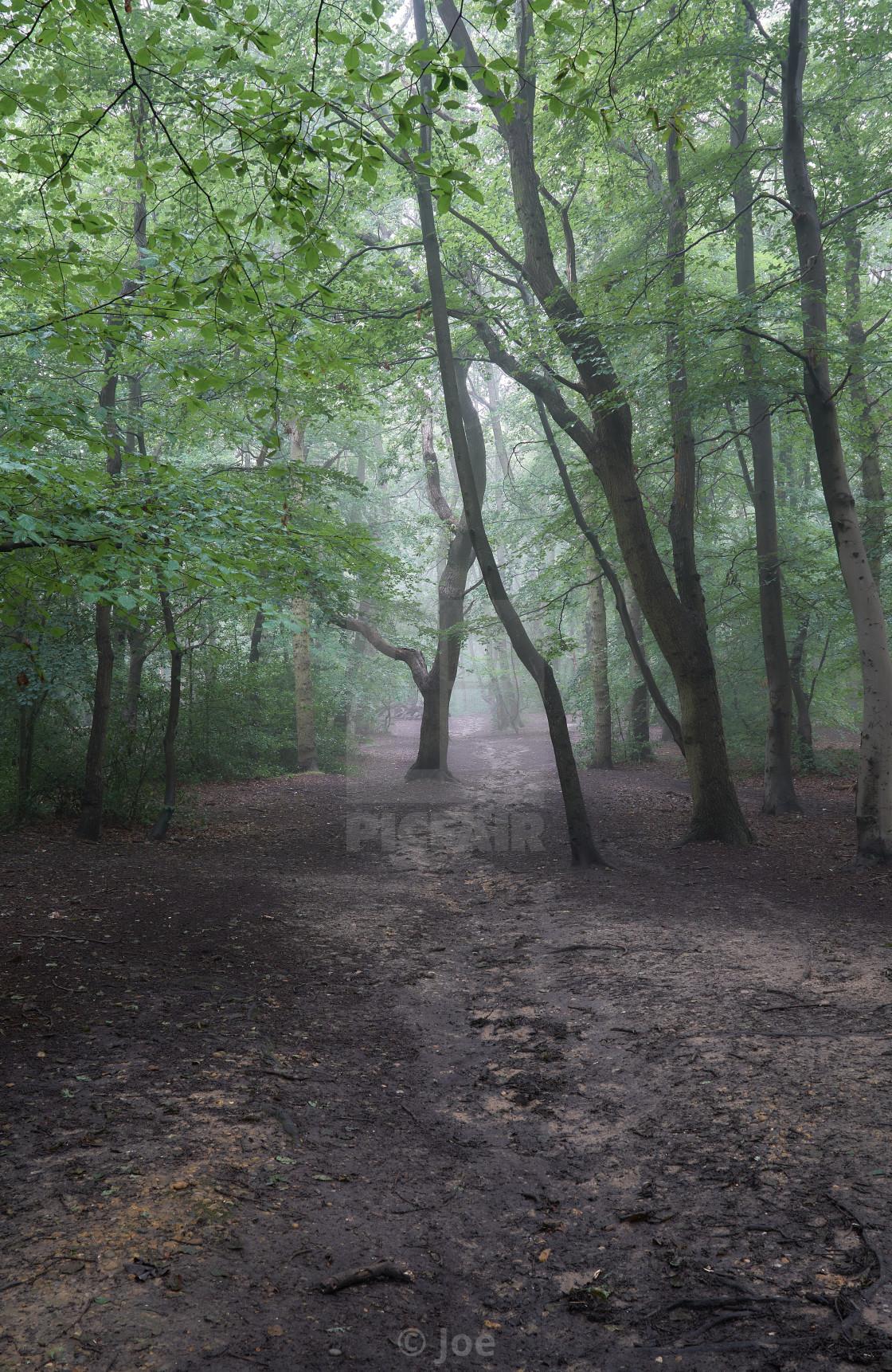 """""""Misty Woodland Path"""" stock image"""