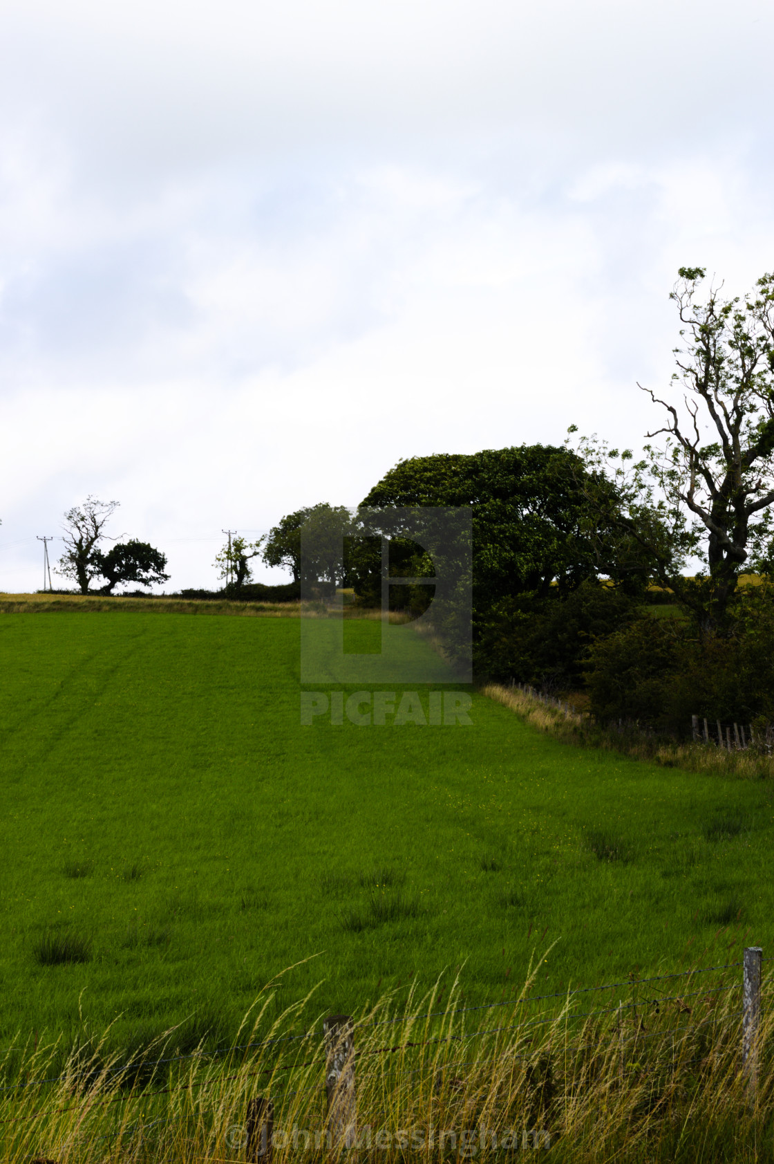 """Portrait view of a tree lined field"" stock image"