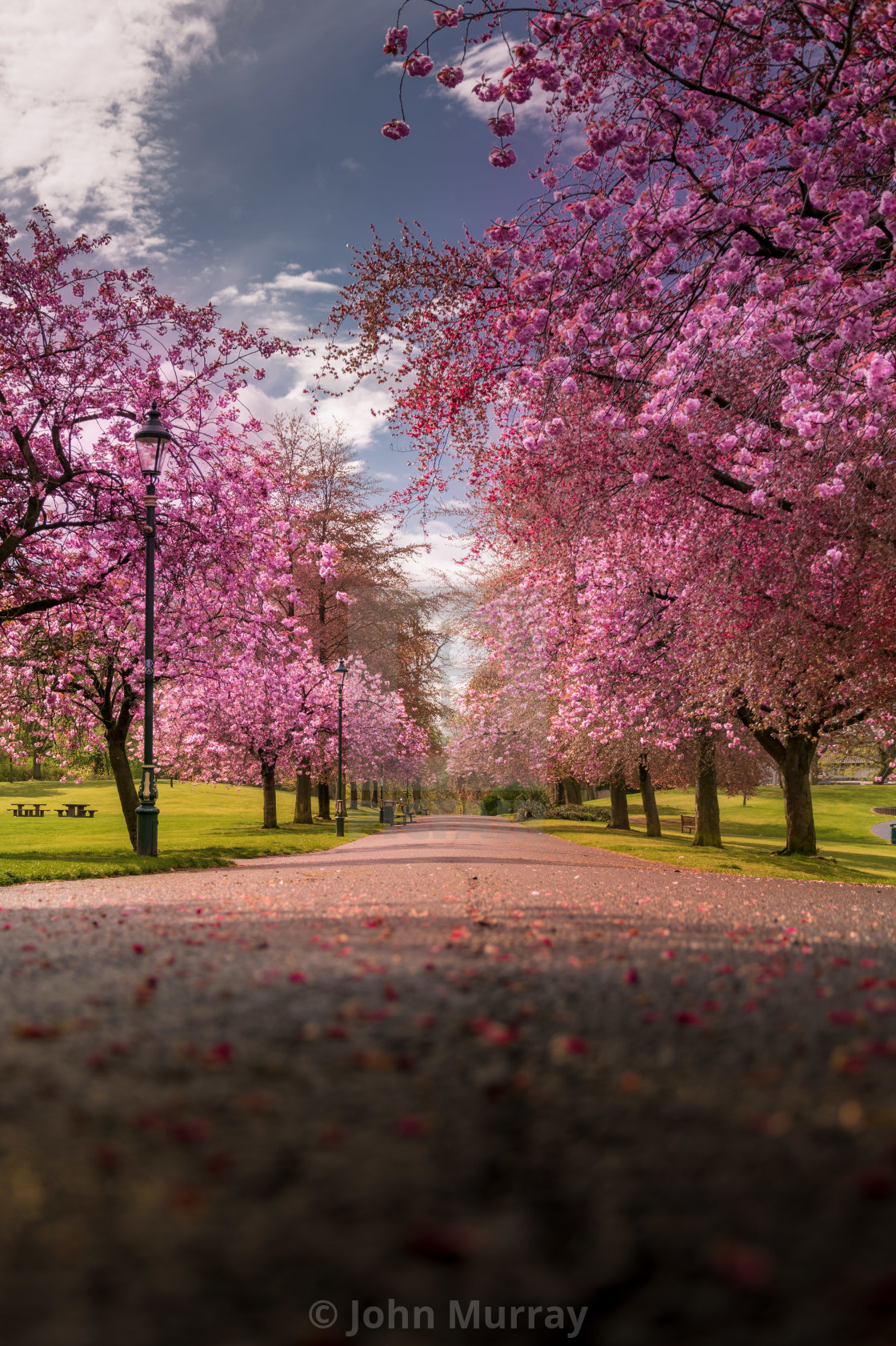 """Blossom in Dunfermline"" stock image"