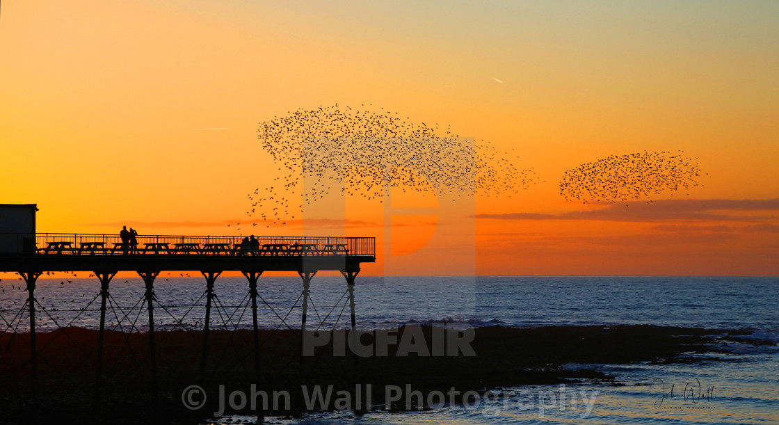 """Starlings arriving for their roost"" stock image"