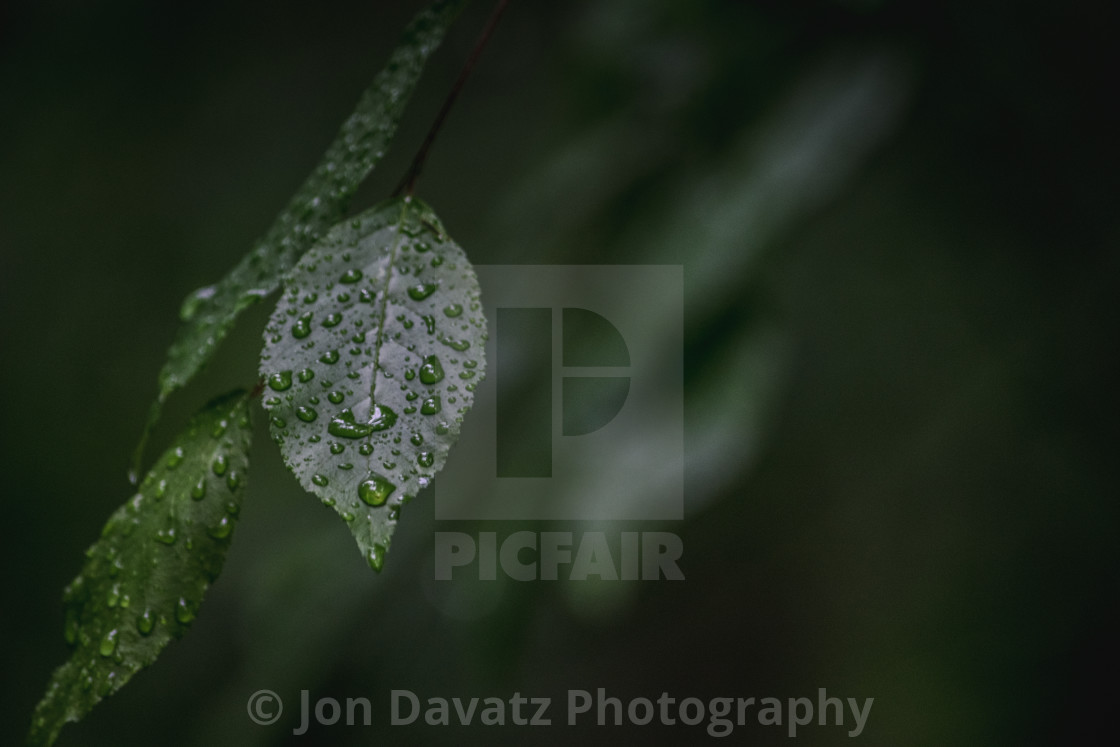 """""""Nature - a single leaf with water drops"""" stock image"""