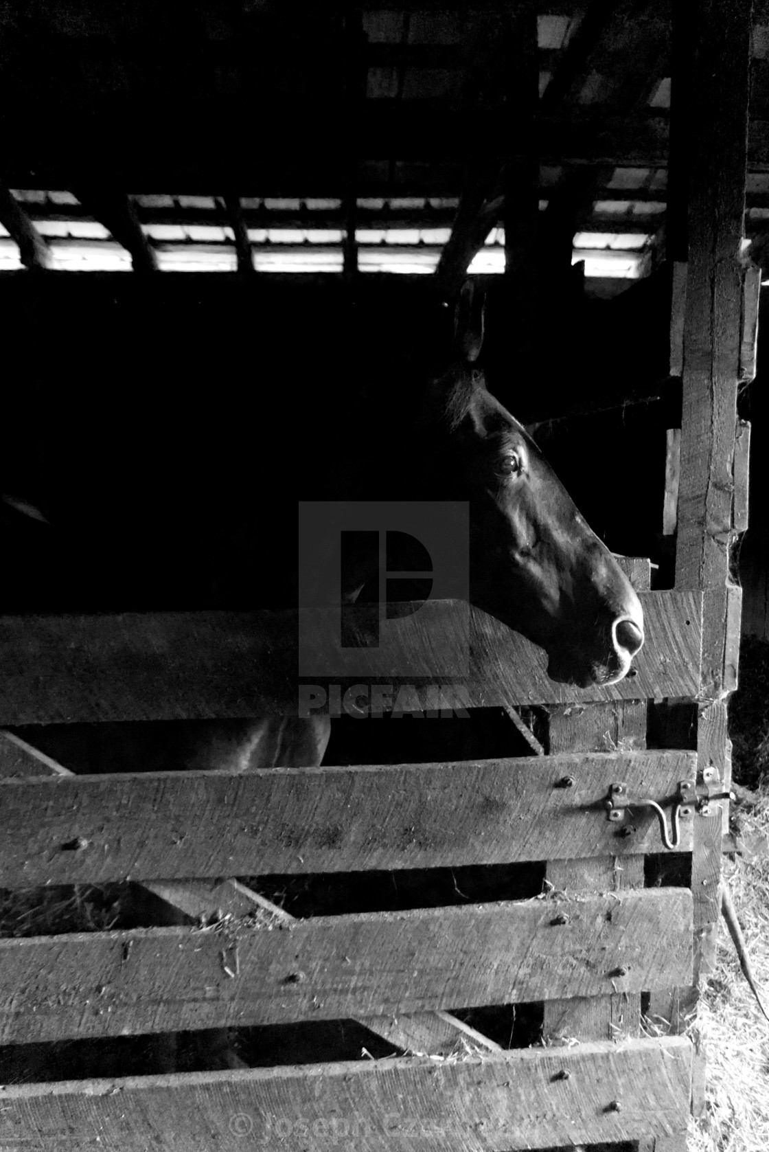 """""""horse in a stable"""" stock image"""