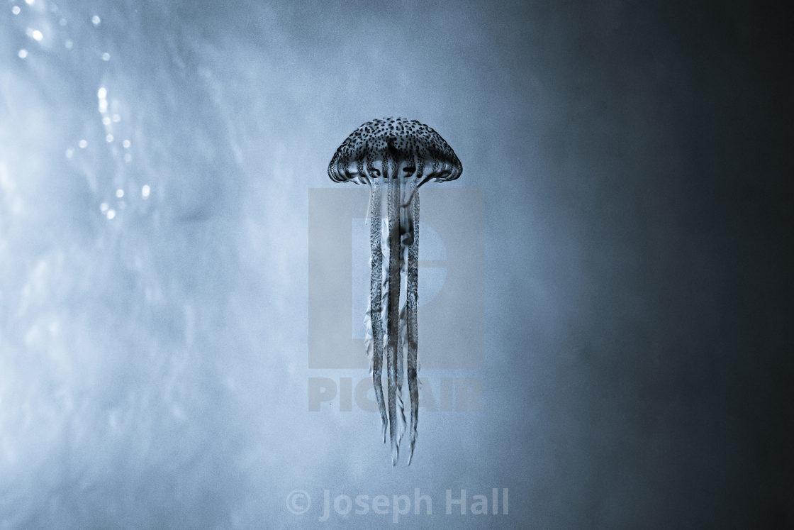 """""""Jellyfish - Underwater Malta"""" stock image"""