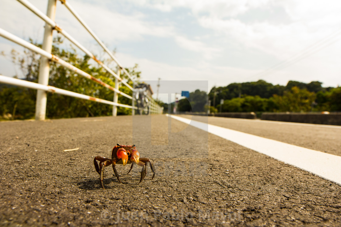 """""""Crab on the road"""" stock image"""