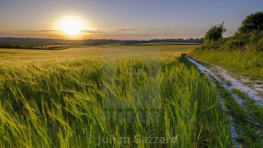 """Summer sunset over wheat field near Winchester, UK"" stock image"