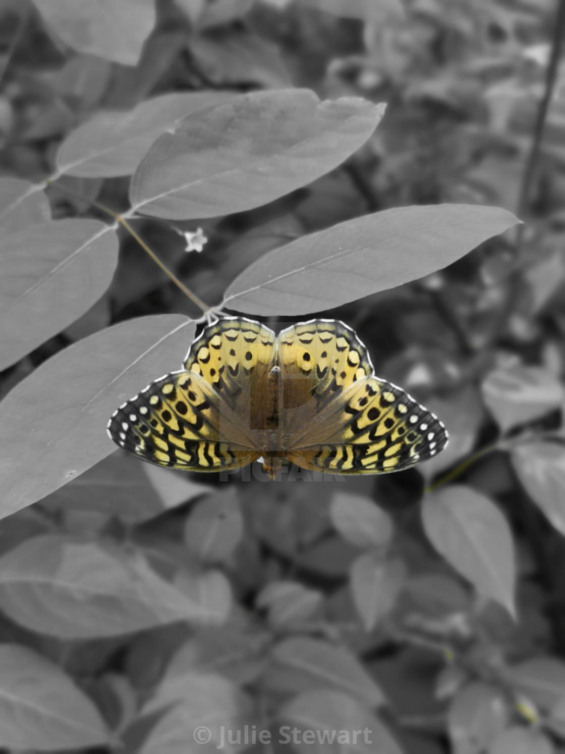 """Butterfly in a grey world"" stock image"