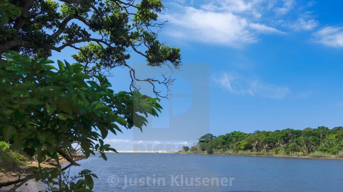 """Estuary Trees"" stock image"