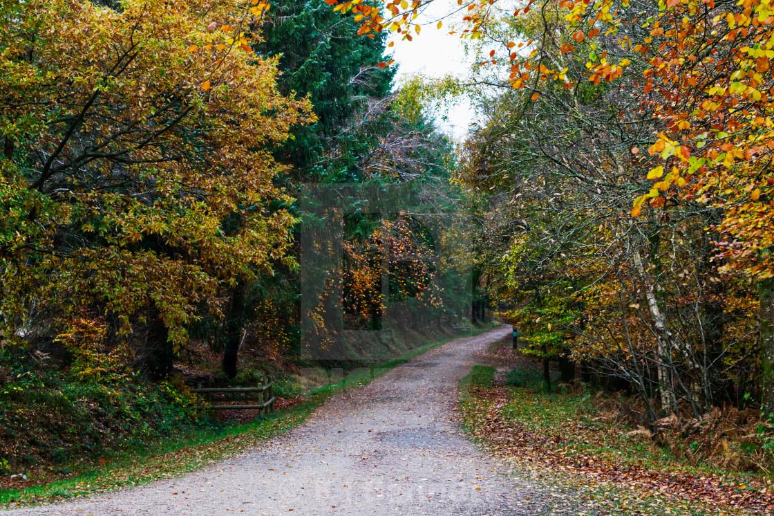 """Haldon Forest, Devon. England - autumn colours"" stock image"
