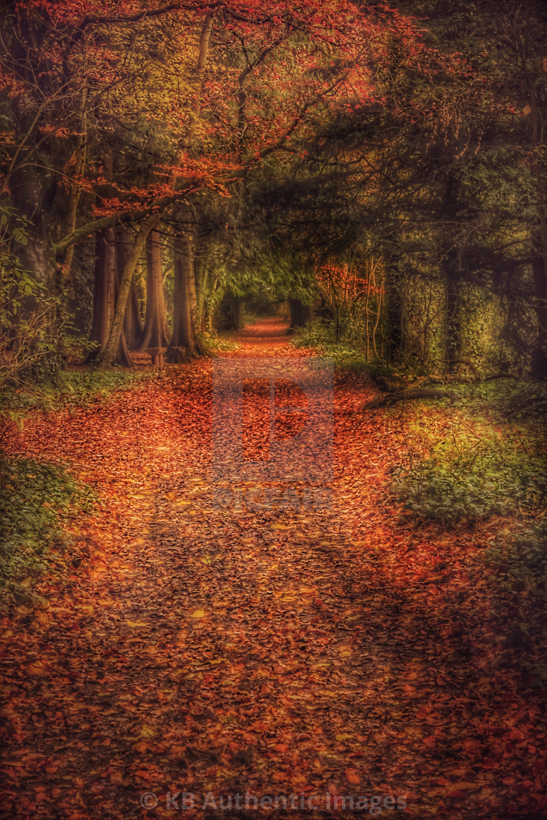 """Autumn Woodland Walk"" stock image"