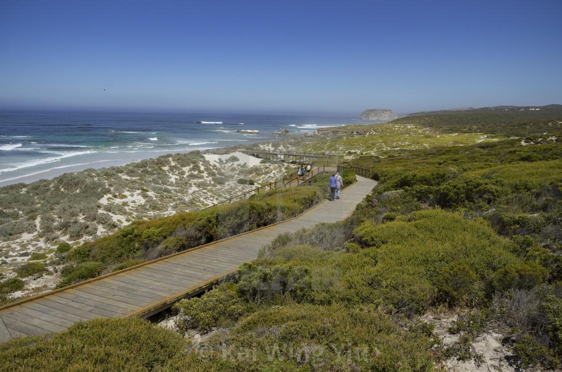 """Seal Bay Boardwalk, Kangaroo Island"" stock image"