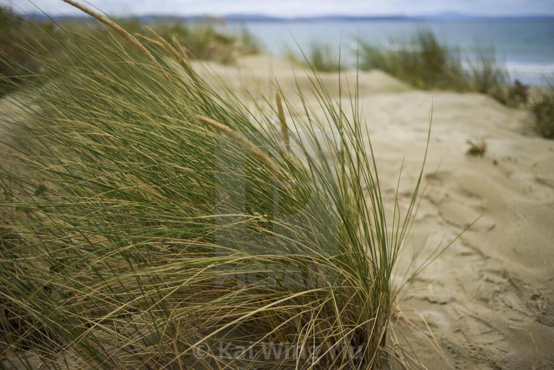 """Coastal grass on the beach"" stock image"